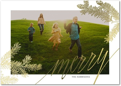 Merry Pine Foil Stamped Holiday Photo Cards by Stacey Day
