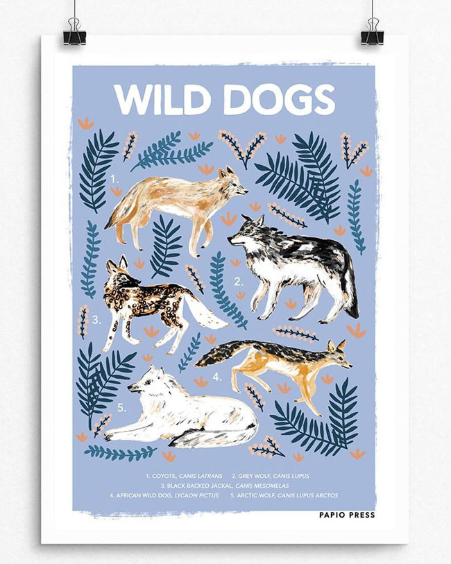 Wild Dogs Natural History Print by Papio Press