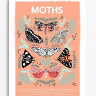 Moths Natural History Print by Papio Press