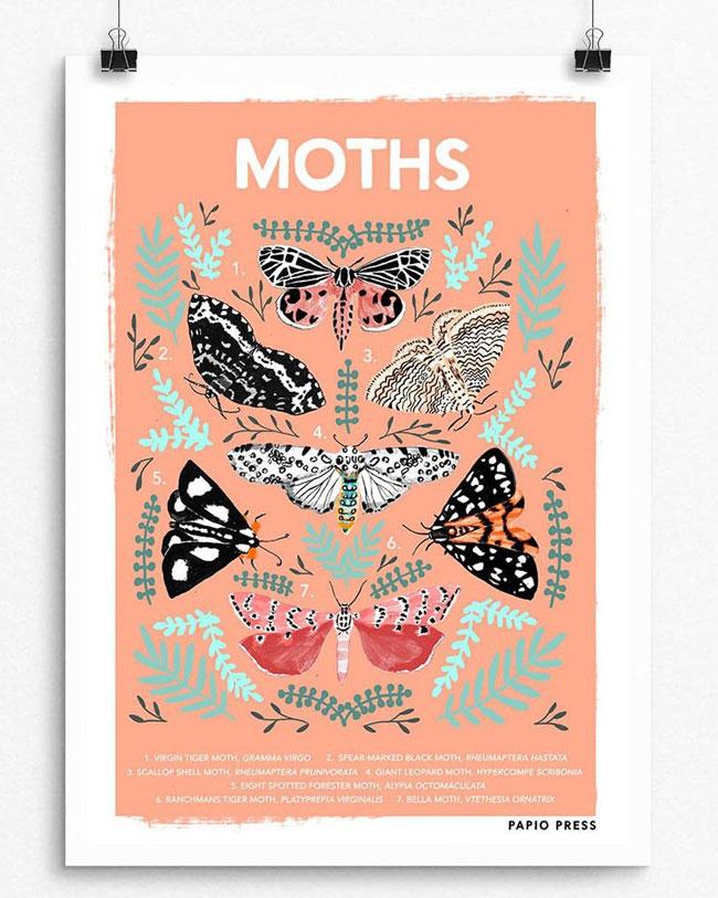 Moths Natural History Print by Papio Press