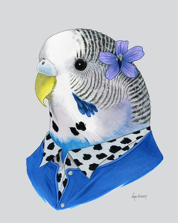 Parakeet Art Print from Ryan Berkley Illustration