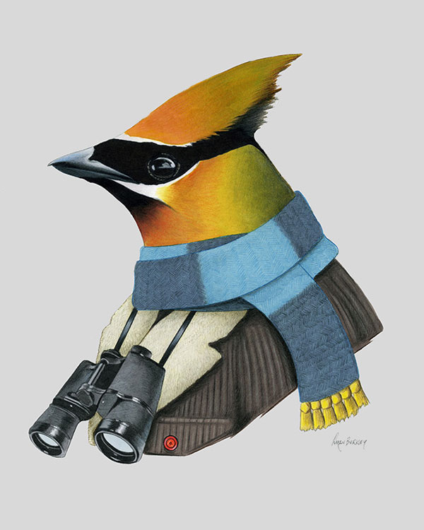 Cedar Waxwing Art Print from Ryan Berkley Illustration