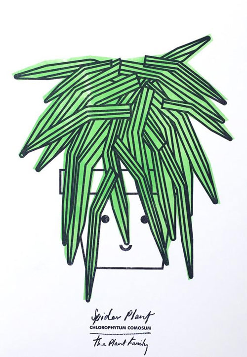 Spider Plant Risograph Art Print from Scout Editions